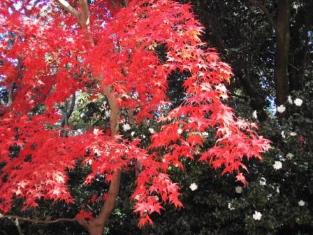 Efterårsfarver i haven
