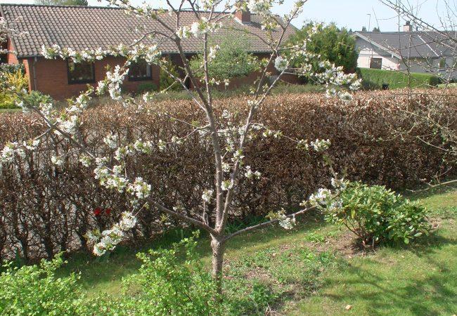 havebilleder Arkiv - Idas Have - inspiration til din have