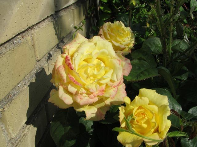 Rosa Per Gynt