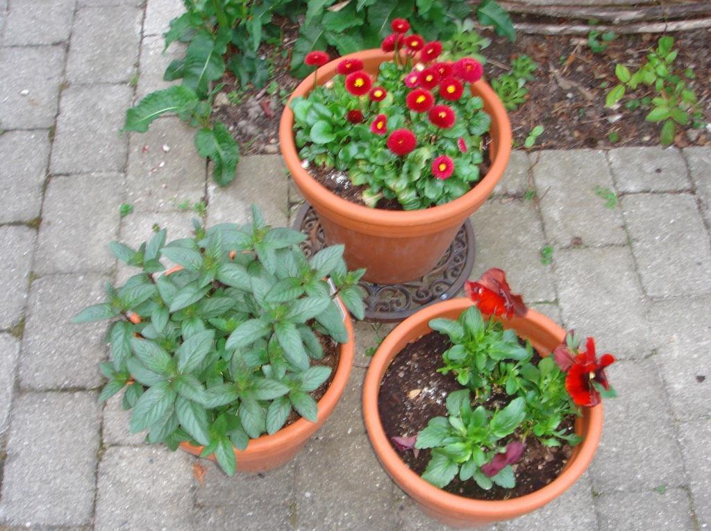 sommerblomster Arkiv - Idas Have - inspiration til din have