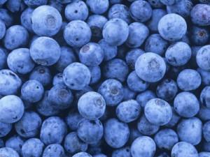 Projekt Blåbær