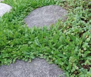 Drop græsplænen?