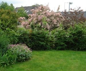 Rododendron og Dronningebusk i fuldt ornat