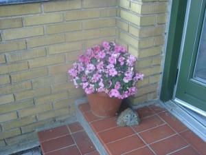 Blomster i poser og potter