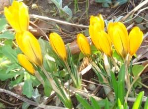 Åh, forår!