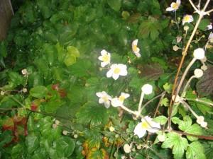 Blomster i oktober
