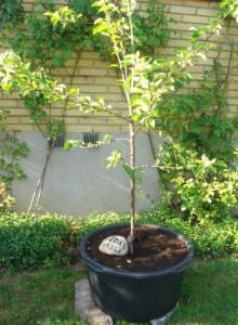 Mobilt æbletræ