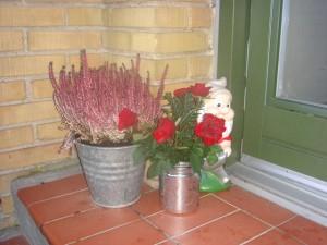 Nisser og roser