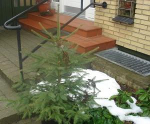 jul i haven2
