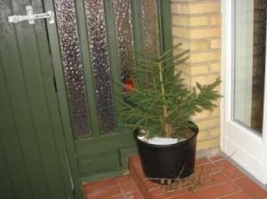 Minijuletræ