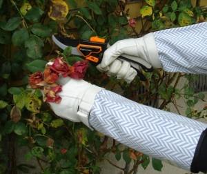 Klip roserne