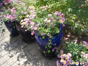 Besøg i Kristinas have