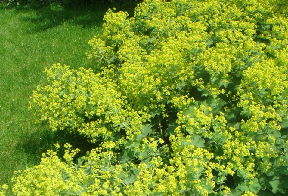 Dk.ronstrand.com  Nemme Blomster Til Haven