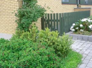 Hvide blomster og grønt hegn