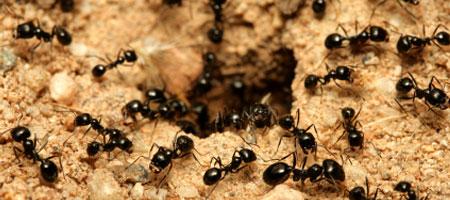 I huset er en sød myre en død myre