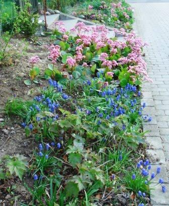Haveplan mod nord   idas have   inspiration til din have